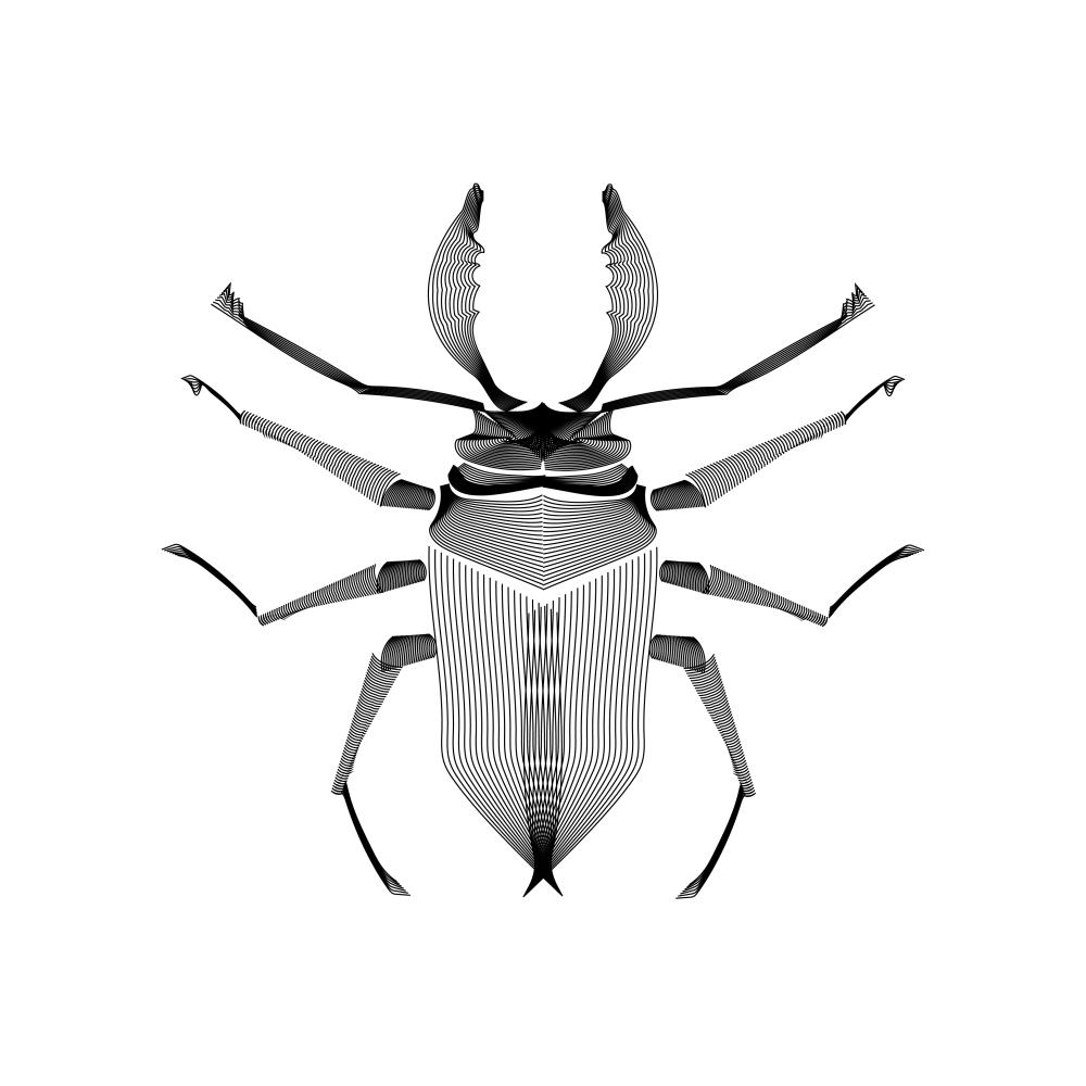 Vector_Xray_Stag Beetle
